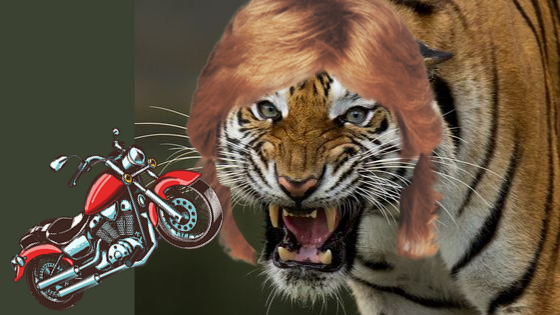 Here's a secret about tigers, mullets, and motorcycles